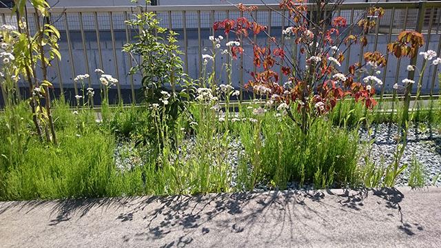 庭に生い茂るスギナとそのほか春の植物
