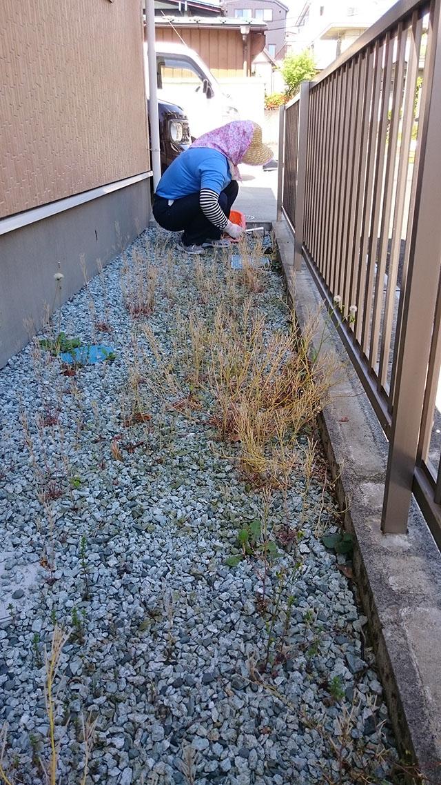 裏庭の枯れた雑草も草刈りしていきます