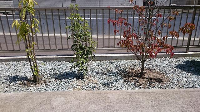 雑草を引っこ抜いてきれいになった植え込み