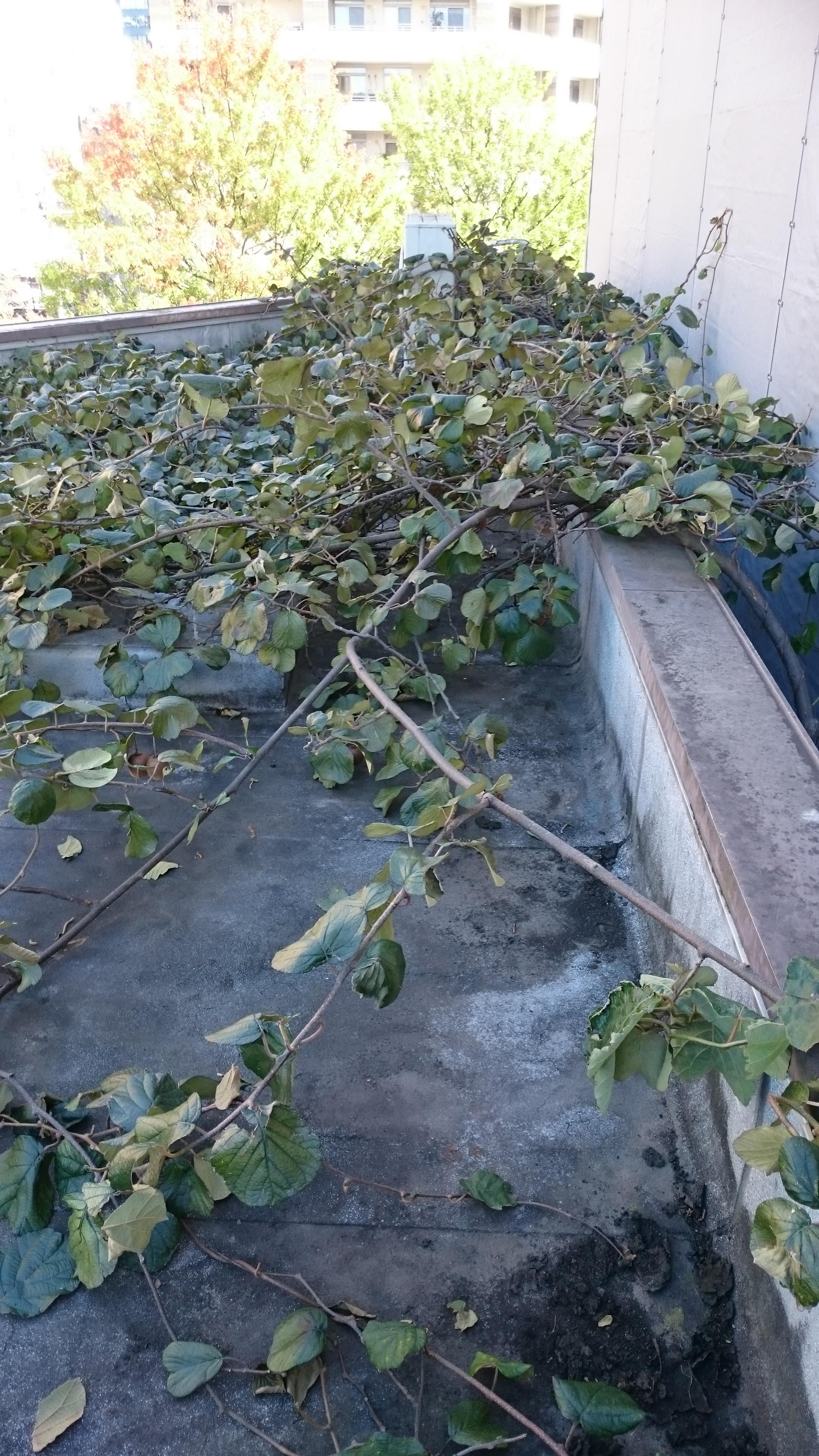 ビル屋上の巨大植物