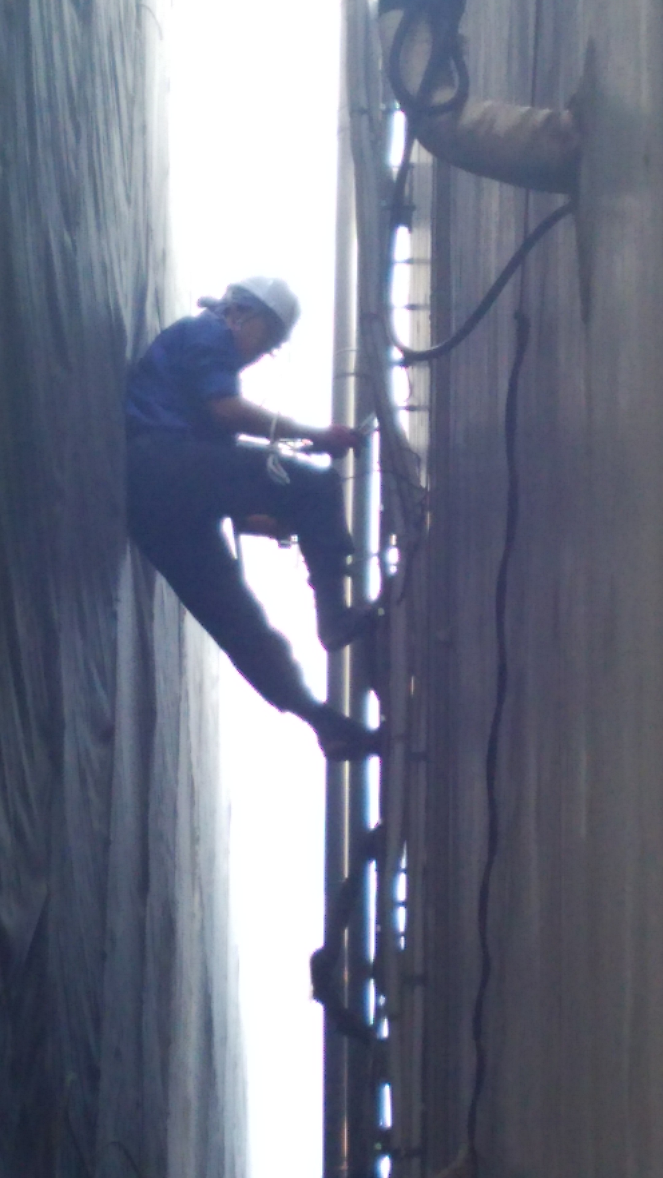 縄梯子で降りながら蔓(つる)を細かく切断してゆきます