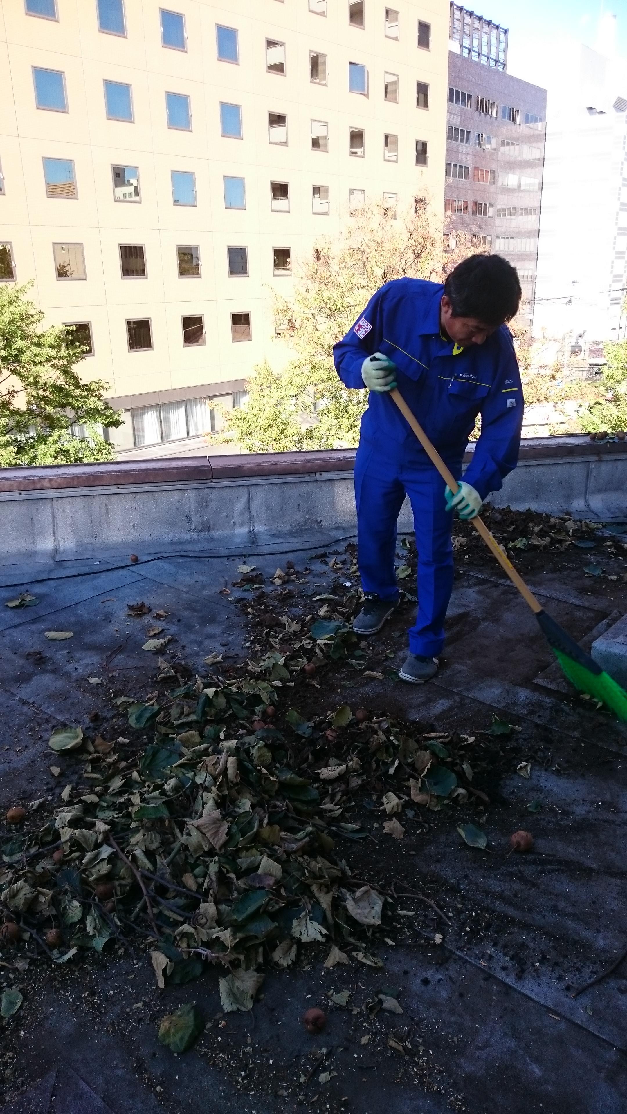 屋上に散乱した葉を片づける