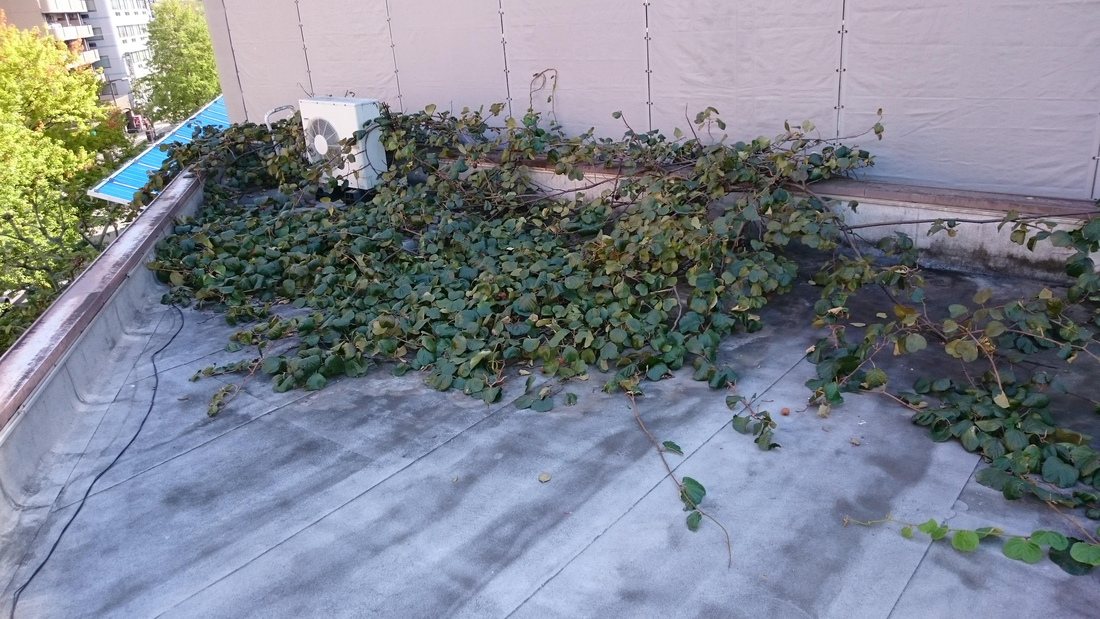 巨大植物がエアコン室外機に絡みつく