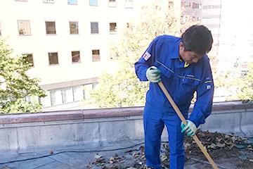 植物の除去