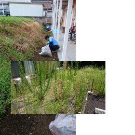 アパート前に生い茂る草の除草作業