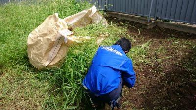 草むしり作業中