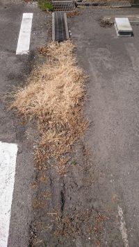 溜まった泥に雑草が生えて枯れた