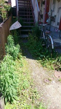 アパートの階段周辺に生えた雑草