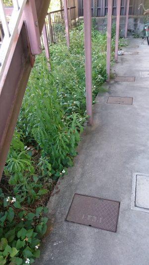 アパート周辺の除草