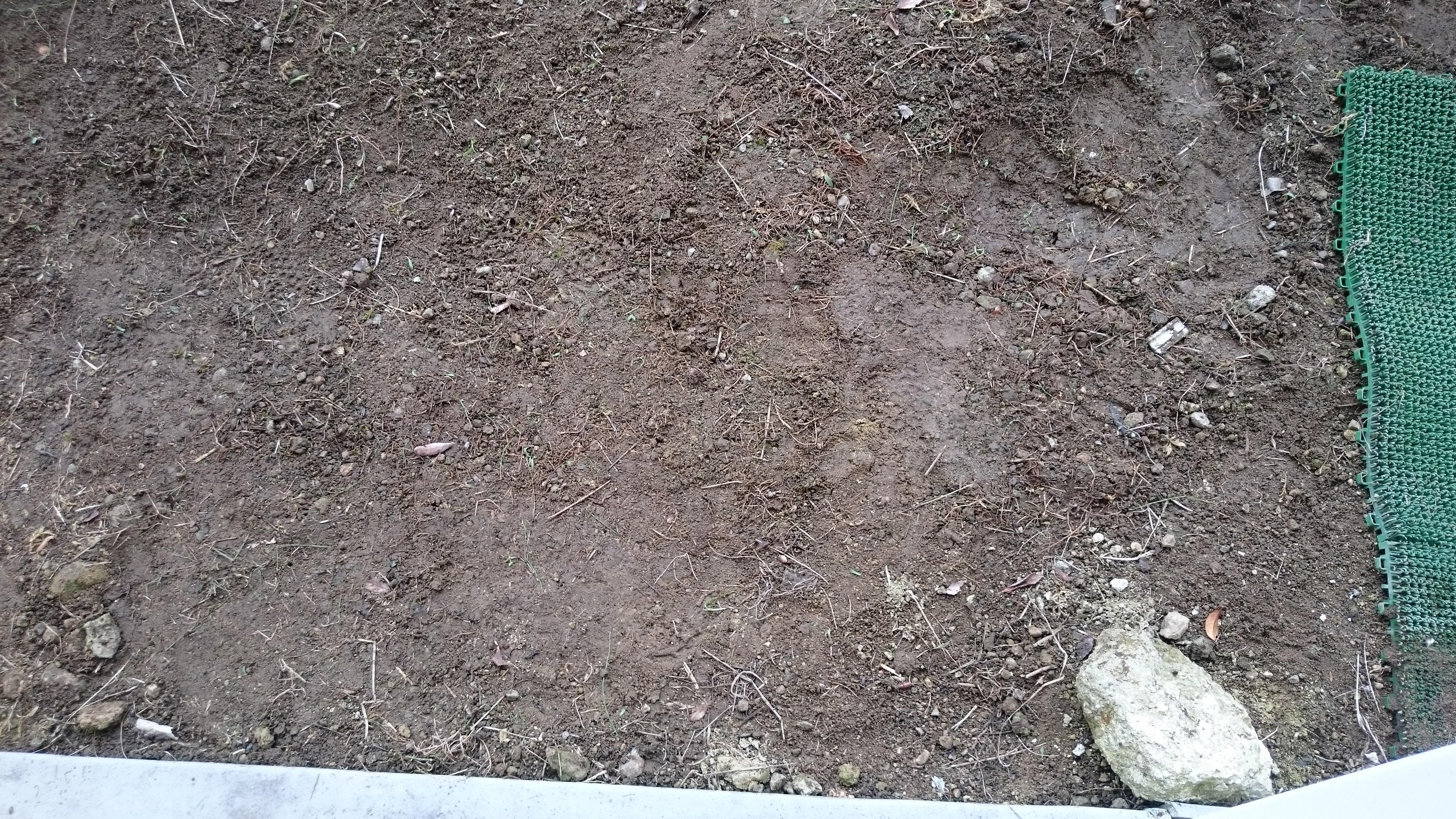 草抜き後の地面