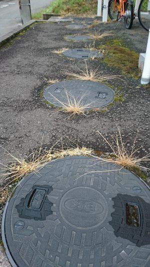 マンホール周辺に生えた草