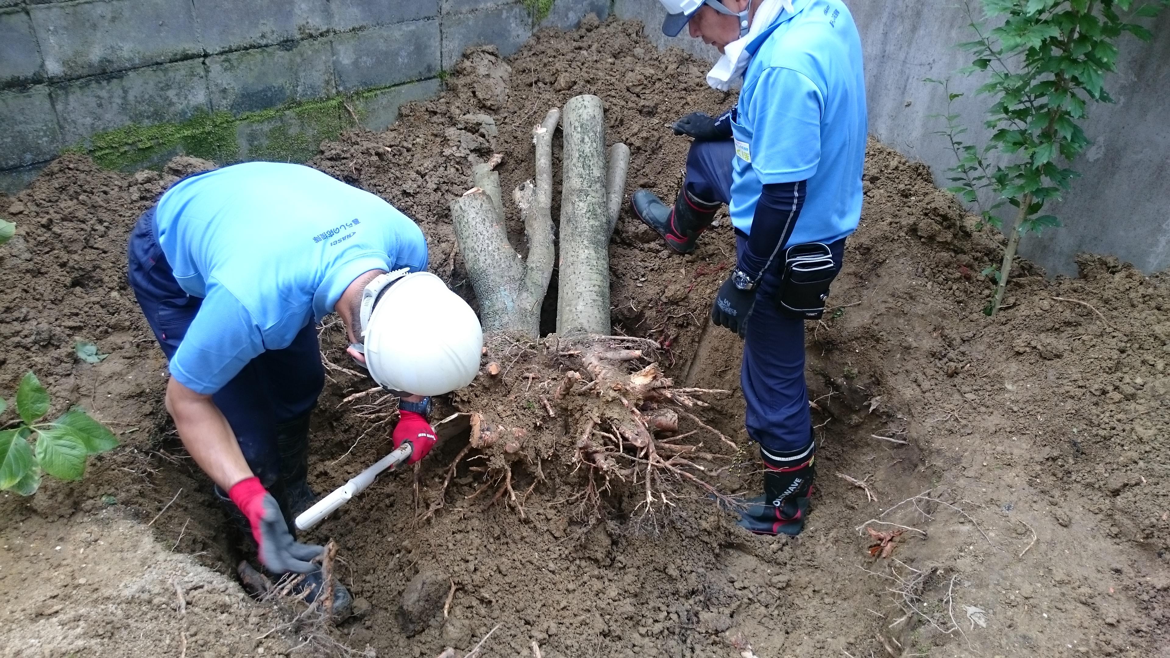 庭木伐採・伐根