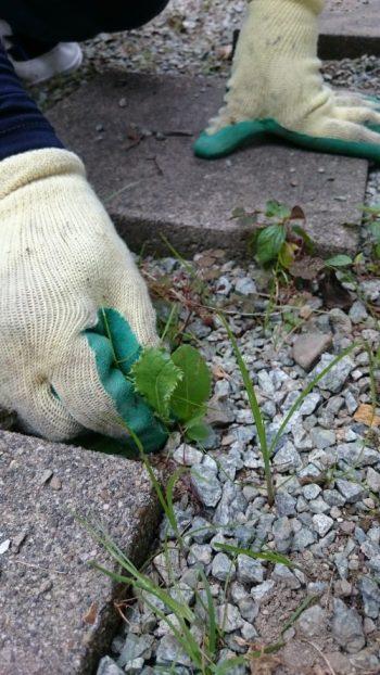 雑草を抜く手のアップ